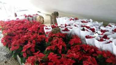 Hamparan Bunga Merah Putih Siap Sambut Raja Salman di DPR