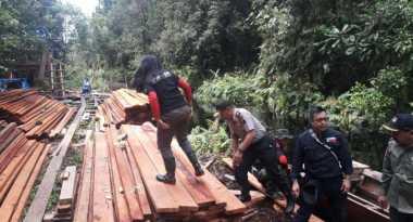 Pembalakan Liar di Hutan Riau Semakin Marak