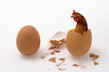 Ini Nih, Asal-usul Pertanyaan 'Mana Lebih Dulu Ayam Atau Telur?'