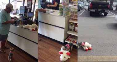 VIDEO: Dapat Boneka Besar, Anjing Kecil Kegirangan