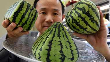 Toko Buah di Jepang Menjual Semangka Seharga Rp360 juta