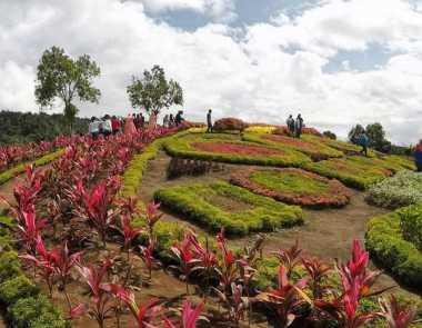 Cantiknya Pesona Taman Bunga di Jambi Ini
