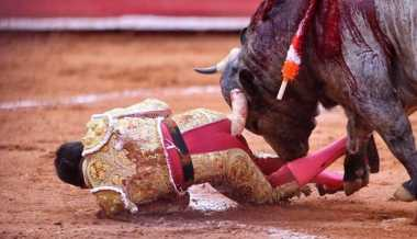 Hii, Bagian Belakang Matador Ini Luka Parah Akibat Tusukan Banteng