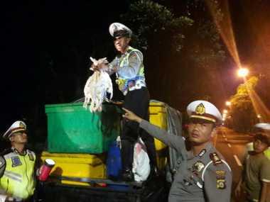 Jelang Nyepi, Polisi Gagalkan Penyelundupan Hewan Ternak ke Bali