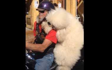 VIDEO: Keren! Ini Aksi Anjing Naik Motor Gede dengan Majikannya