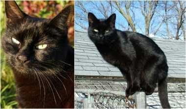KISAH: Asal-usul Kucing Hitam Dianggap Pembawa Kutukan