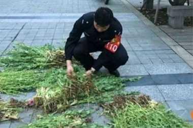 Petani Lansia di China Diciduk Akibat Tanam Opium