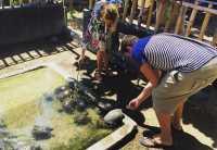 Serangan, Pulau Kecil Berjuta Manfaat bagi Penyu