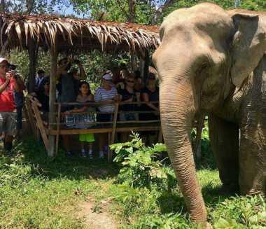 Yuk Sambangi Penangkaran Gajah Favorit Selebriti Dunia di Thailand