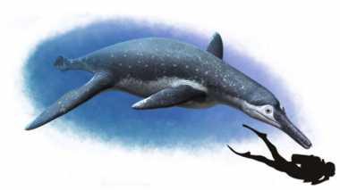 Ilmuwan Temukan Fosil Spesies Reptil Langka di Rusia