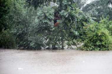 Tak Bisa Berenang, Suprihatin 2 Jam Bertahan di Atas Pohon Akibat Banjir