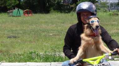 Sidney, Anjing yang Piawai Mengendarai Motor di Manado