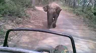 VIDEO: Duh! Bersafari, Kelompok Turis Ini Justru Dikejar Seekor Gajah