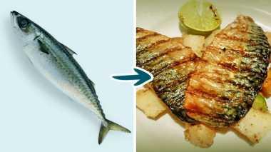 HOT THREAD (4): Nih Jenis Ikan yang Enak, tapi Berbahaya Jika Dimakan!