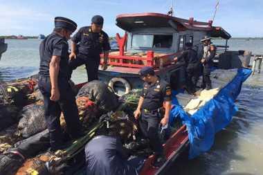 Upaya Penyelundupan Bibit dan Pohon Kurma Berhasil Digagalkan di Aceh