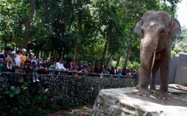 Kisah Kebun Binatang Ragunan, Tempat Favorit saat Libur Lebaran