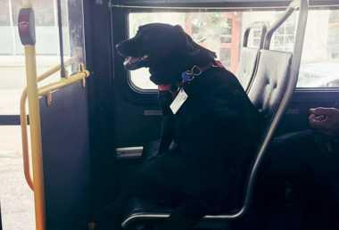 VIDEO: Lucunya, Anjing Pintar Ini Hobi Naik Bus Sendiri ke Taman
