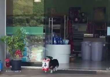 VIDEO: Tak Bikin Repot Pemiliknya, Anjing Ini Jajan Sendiri ke Toko