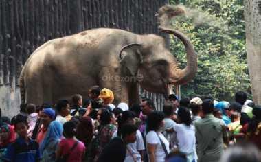 ALAMAK, Lebaran Hari Kedua, Kebun Binatang Ragunan Tembus 80.271 Pengunjung