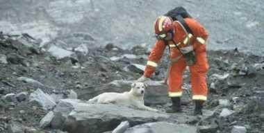 VIDEO: Cari Majikan di Timbunan Tanah Longsor, Seekor Anjing Bikin Warganet Terenyuh