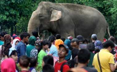 H+2 Lebaran, 35 Ribu Pengunjung Sesaki Kebun Binatang Ragunan Siang Ini