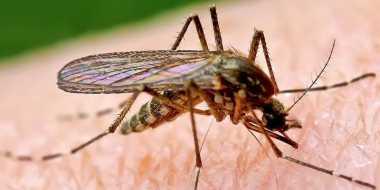 HOT THREAD (5): Waspada, Orang-Orang seperti Ini Suka Digigit Nyamuk Lho
