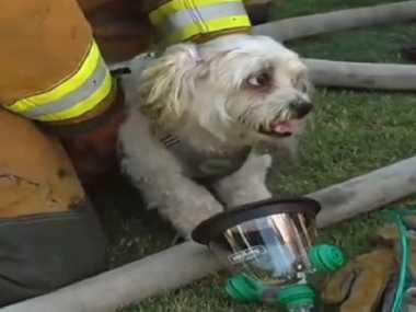 VIDEO: Dengan Masker Khusus, Damkar AS Hidupkan Kembali Seekor Anjing