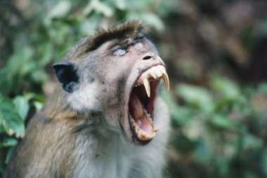 Duh, Remaja Texas Menderita Luka Setelah Diserang Monyet Misterius