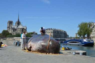 """""""Paus"""" Raksasa Terdampar di Tengah Kota Paris Buat Warga Kebingungan"""