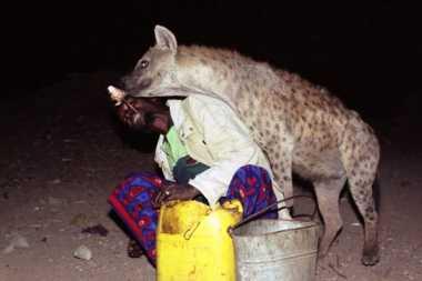 VIDEO: Menegangkan! Pria di Ethiopia Ulurkan Tangan Beri Makan Hyena pada Malam Hari