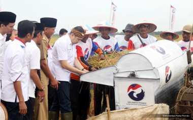 Jelang Panen, Petani Kupang Akui Bibit Padi Bantuan Partai Perindo Tingkatkan Ekonomi Keluarganya