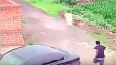 VIDEO: Niat Maling, Pria Ini Terkejut Liat Pemilik Indehoy Dalam Mobil