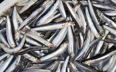 Krisis Garam, 9 Bahan Pengganti Garam untuk Lezatkan Masakan, Bubuhkan Ikan Teri