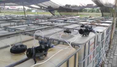 Hebat! Mahasiswa Kembangkan Teknologi Produksi Mikroalga sebagai Sumber Bioenergi