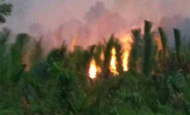 Ratusan Hektare Lahan di Jambi Terbakar, Diduga Akibat Ngasal Bakar Sampah