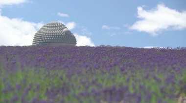 KEREN! Patung Buddha Raksasa Terbaru Dikelilingi Tanaman Lavender