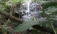 SHARE LOC: Bertualang Mencari Air Terjun yang Tersembunyi di Hutan Belantara Bengkulu