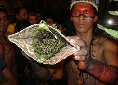 Hiiiii, Tradisi Paling Menyakitkan di Dunia, Digigit Semut Peluru Ratusan Ekor!