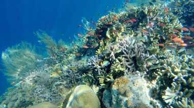 UNCOVER INDONESIA: Pulau Widi, Maldives Indonesia yang Bertabur Ikan dengan Air Sebening Kaca