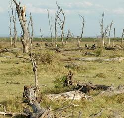 Kekeringan yang disebabkan El Nino. (Foto: www.vfej.vn)