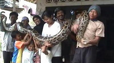 Ular sanca aneh digendong Asep Saeful dan keluarganya. (Dok: Sun TV)