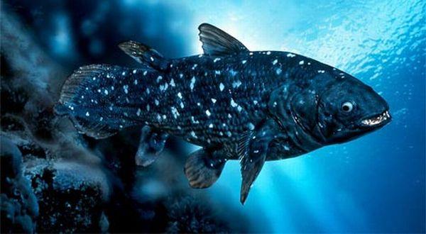 23 Ikan Zaman Purba yang Masih Hidup di Indonesia