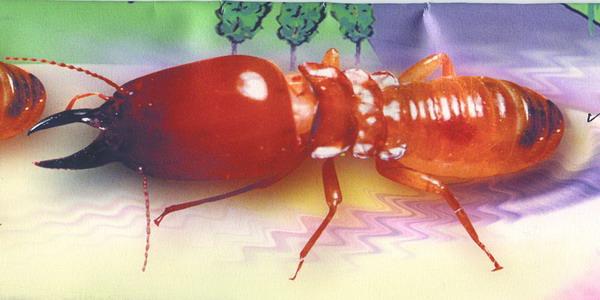 jasa anti rayap