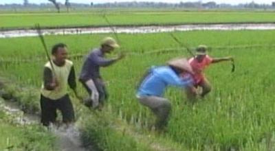 Gropyok Massal hama tikus di Solo (Dok: Sindo TV/Septyantoro)