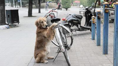 Anjing Penjaga Sepeda TuanNya