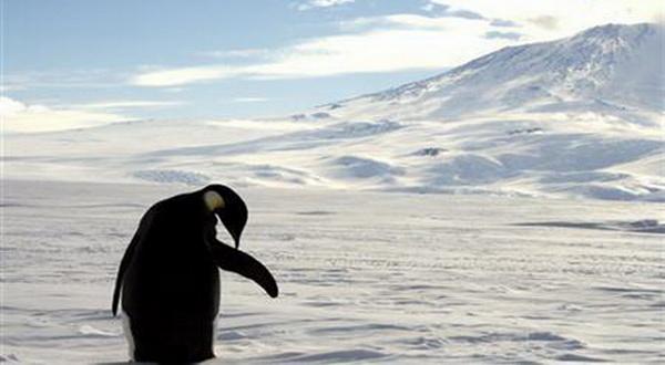 Peneliti Gunakan Satelit untuk Sensus Populasi Pinguin