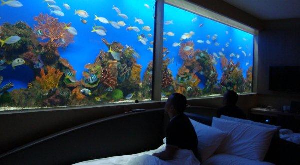 Hotel Nyaman Cantik Dengan Akuarium Raksasa Okezone