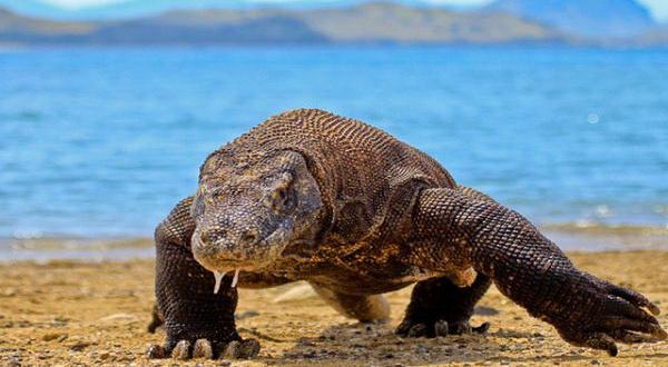 Inilah 5 Reptil Terbesar di Planet Bumi
