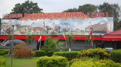 Kebun Binatang Surabaya (Foto: okezone/Amir Tejo)