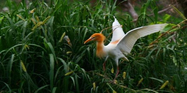 ilustrasi burung (foto: Risna Nur Rahayu/ Okezone)